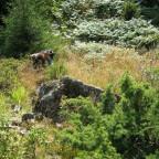 Hargemarkens Naturreservat